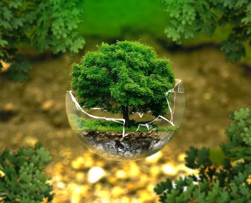Baum in Kugel eco3